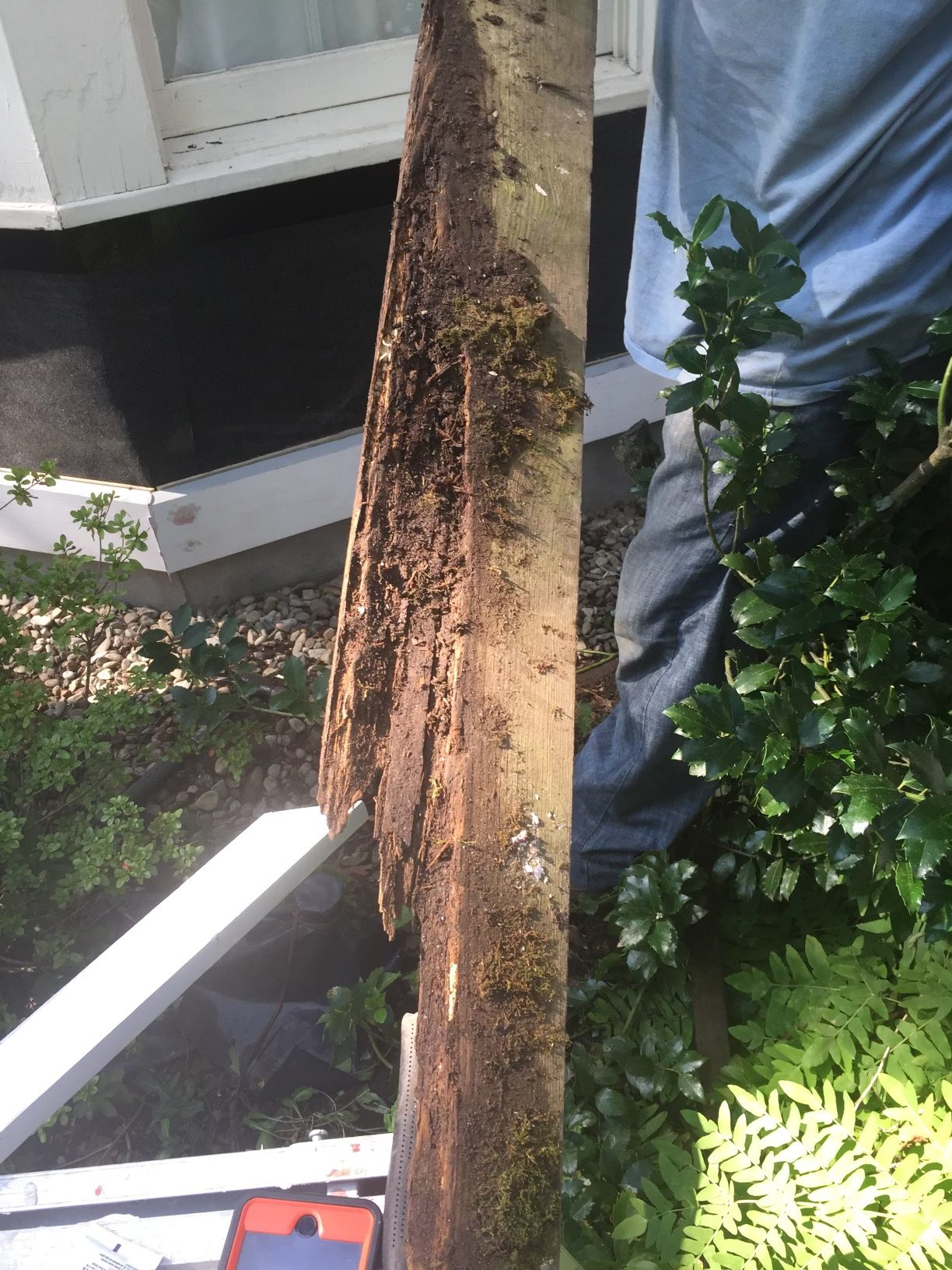 Rotted Wood Repair